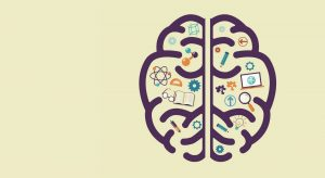 Brain development with education